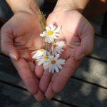 flower-22656__180