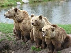 bear-1206881__180