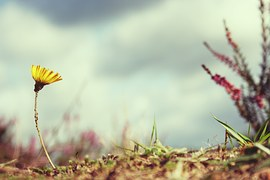 flower-815301__180